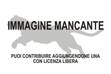 Immagine di Quercylurus major mancante