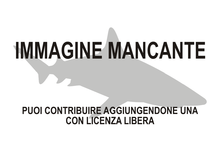 Immagine di Pliotrema warreni mancante