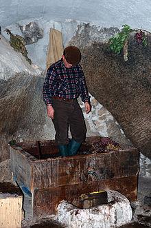 La spremitura dell'uva con i piedi dopo la vendemmia, la prima operazione del metodo di produzione tradizionale