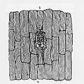 Adena surface burial on a layer of bark.JPG