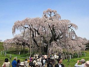 福島県's relation image