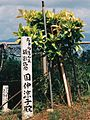 CYURASAN taking a picture afforestation KOHAMA elementary and junior high schools Okinawa,JAPAN.jpg