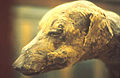 Animals dog mummy.jpg