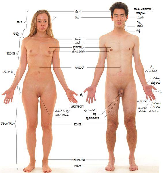 body parts sex ed