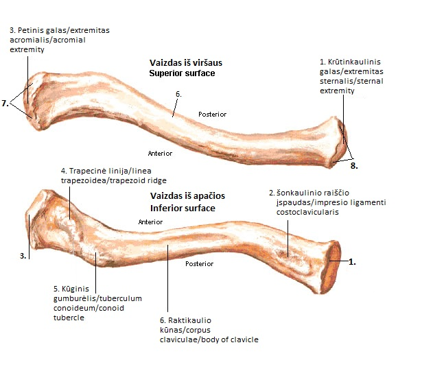 Image Result For Anatomy Of A