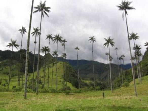 Valley of Cocora