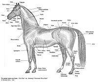 Horse the full wiki include this on your siteblog ccuart Gallery