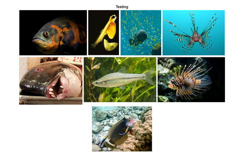 Gallery example for snippet expanded image.png