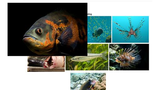 Gallery example with expanded image for snippet page.png