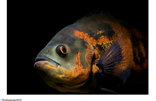 Fish example one.png