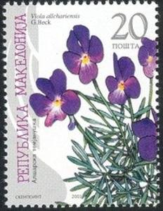 Viola-allchariensis mk.jpeg&filetimestamp=20120223221448&