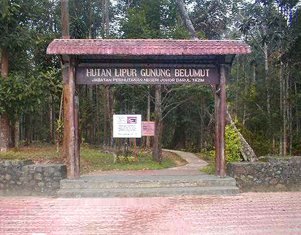 Image result for gunung belumut