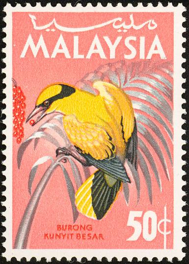 Burung Kunyit Besar Wikipedia Bahasa Melayu Ensiklopedia Bebas