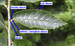Reflection of Love: Daun Bawang - Daun Prei - Daun Serai.....!!!!!