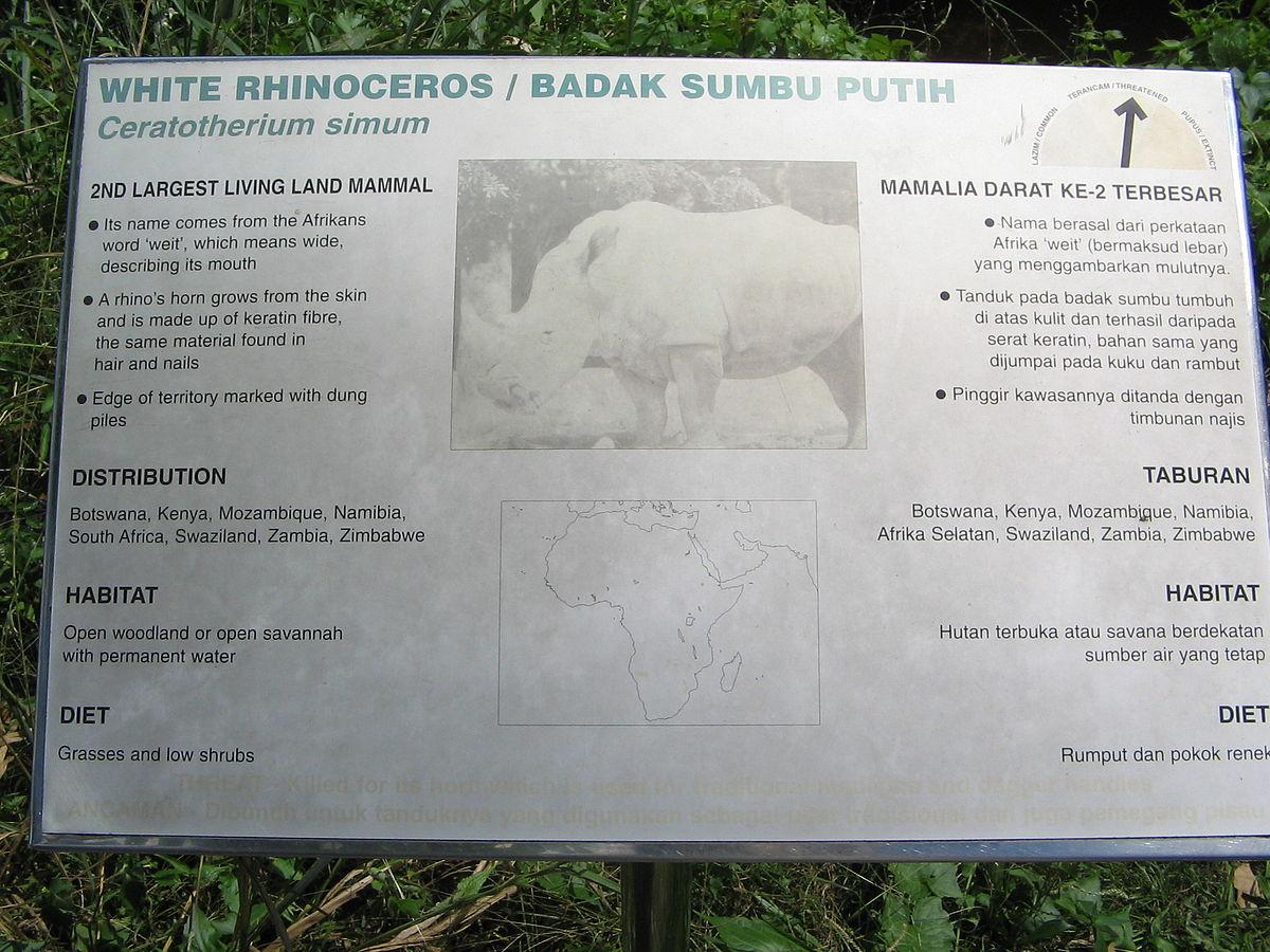 Badak Sumbu Putih - Wikipedia Bahasa Melayu, ensiklopedia