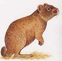 Animales En Peligro De Extinción y Extintos...