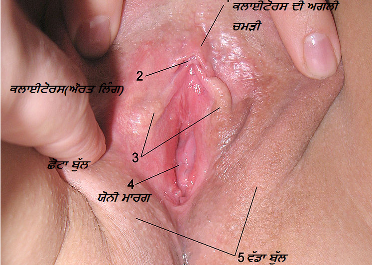 dialiated vagina pictures jpg 1152x768