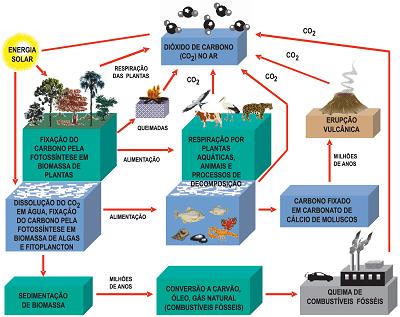 Ciclo do carbono – Wikipédia, a enciclopédia livre
