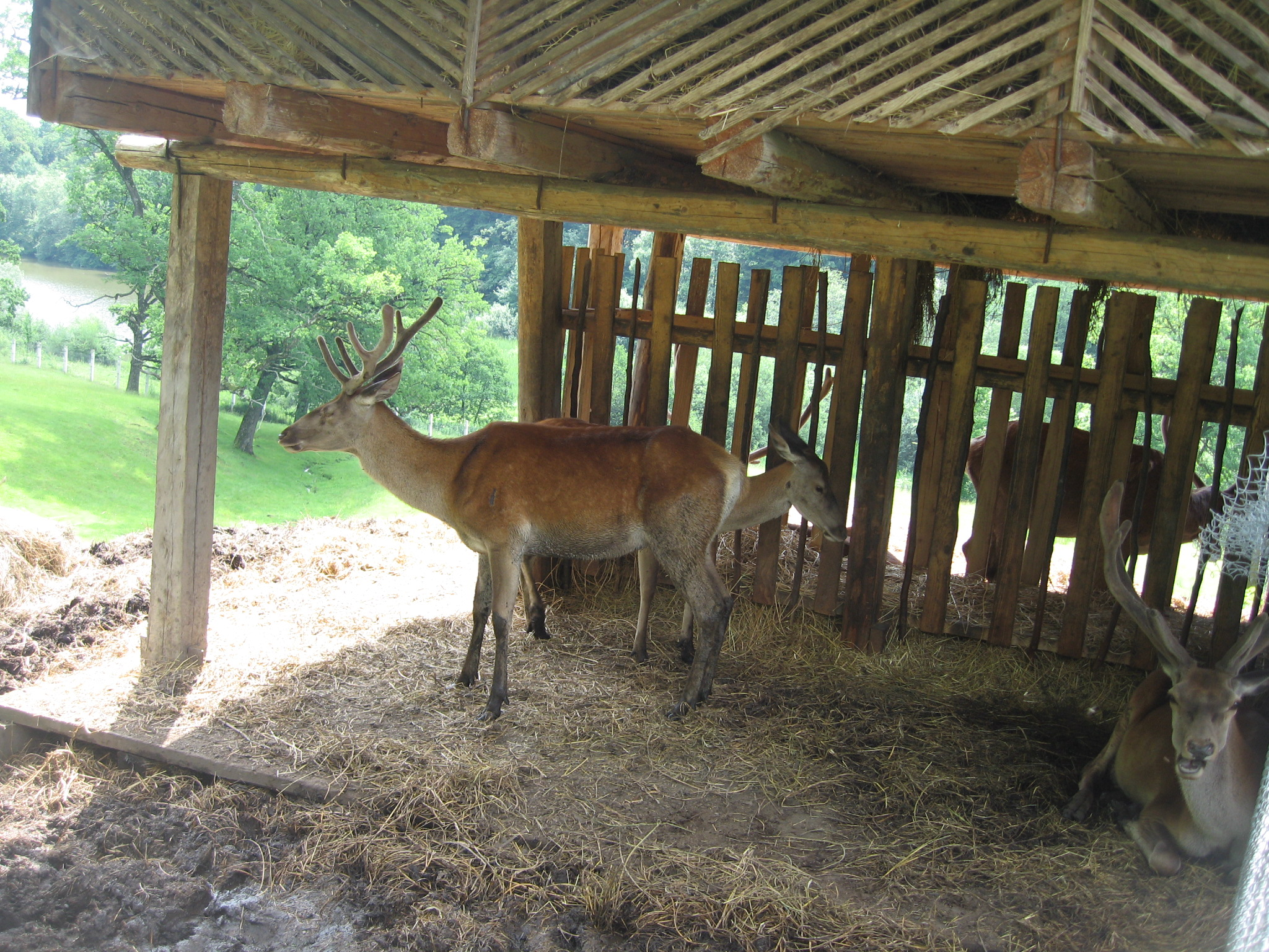 Fişier:Parcul Natural Vânători Neamţ3.jpg