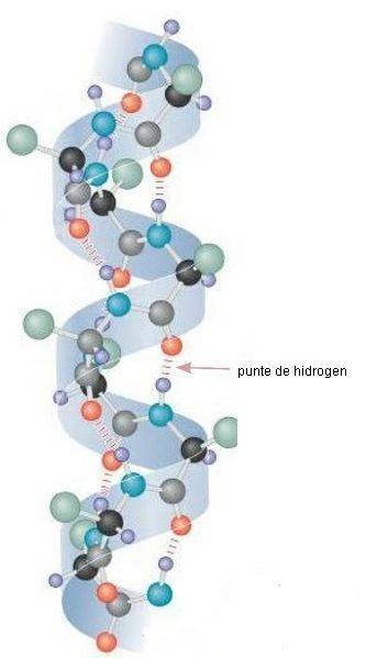 alfa helix