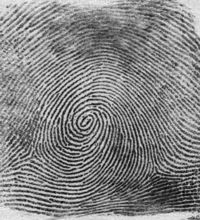 основные формулы отпечатков пальцев