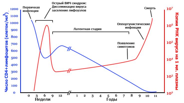 Процент заражения вич кунилингус