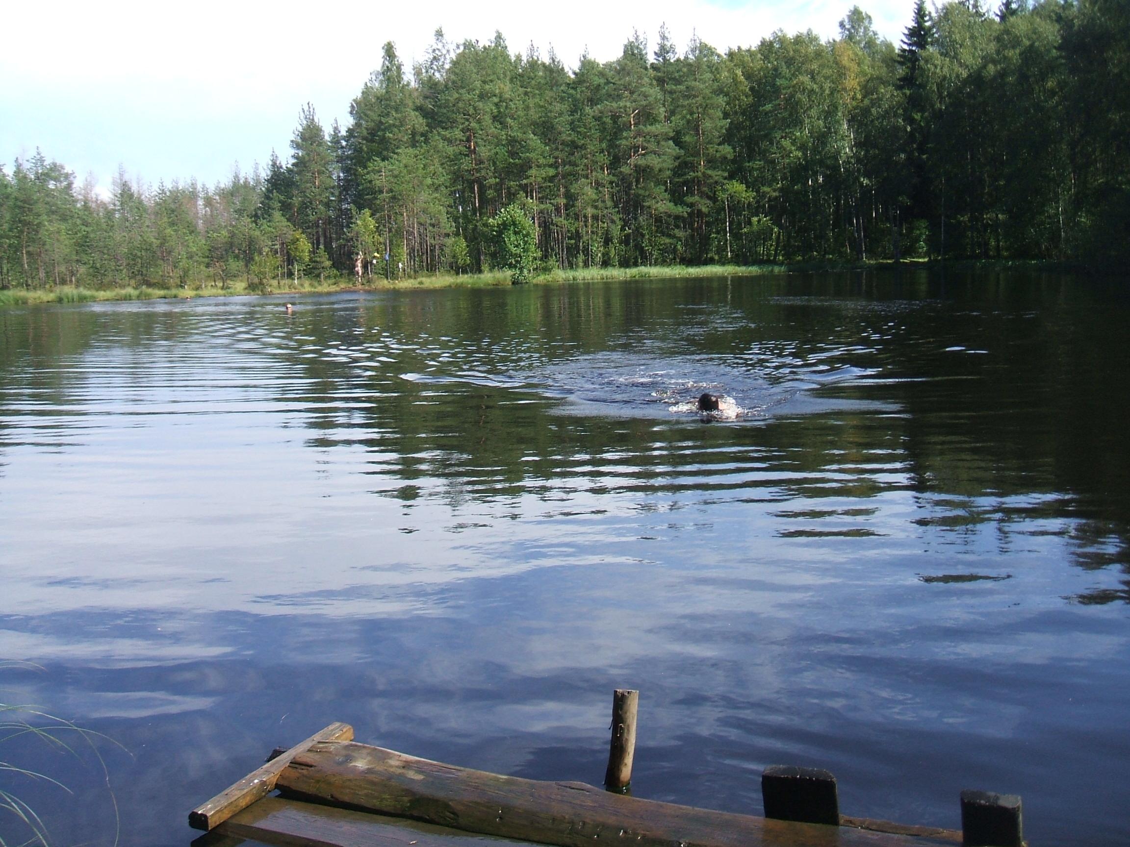 Картинки по запросу лесное озеро