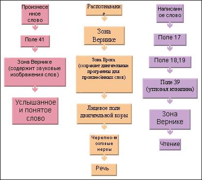 Файл:Схема речи.jpg