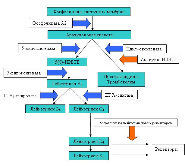 ацетилсалициловая кислота и бронхиальная астма