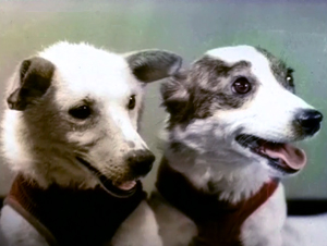 Belka and Strelka.Space Dogs.Real-i.jpg