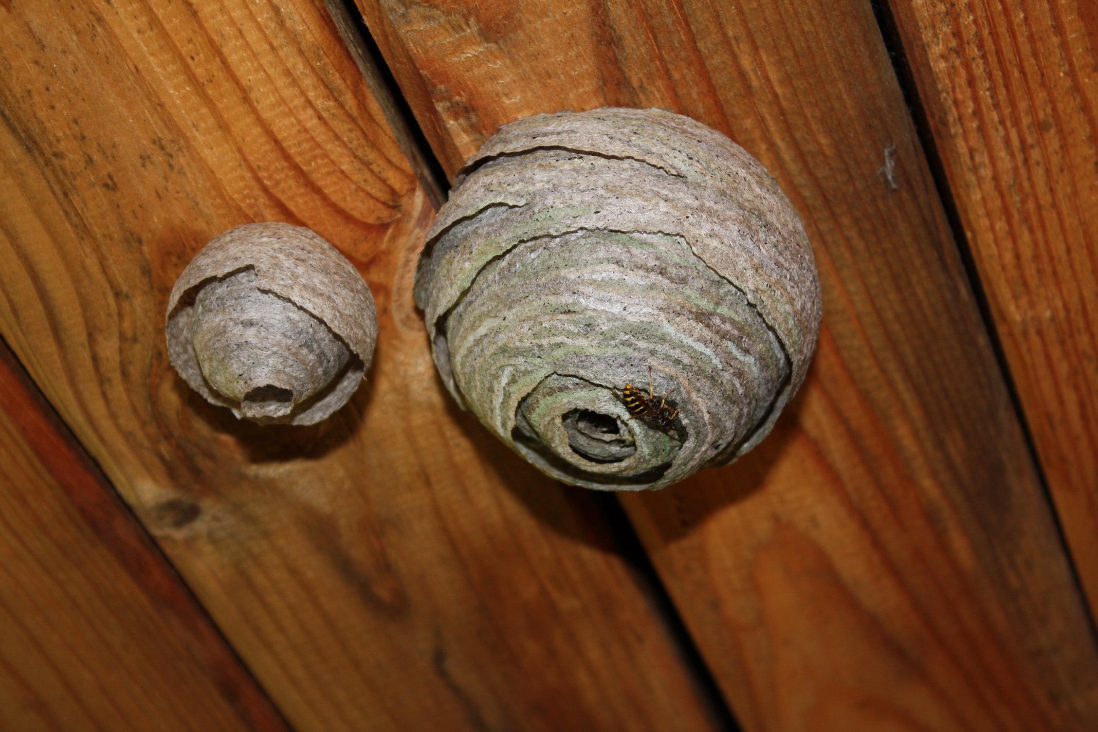 Осиное гнездо из чего сделано