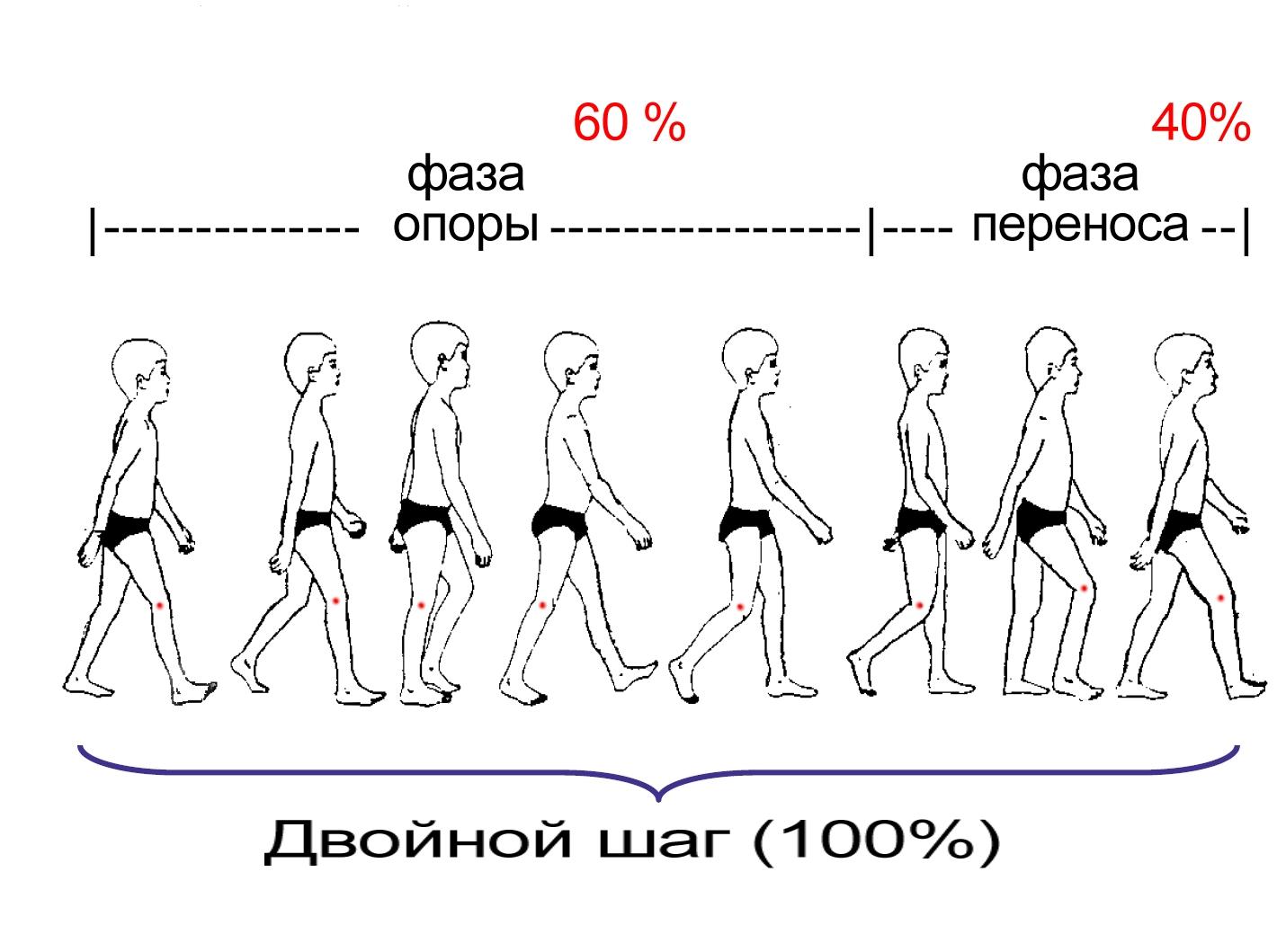 Как сделать анимацию ходьбы 226