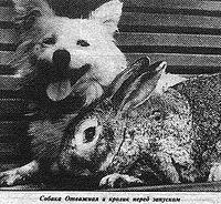 Отважная и кролик Серый