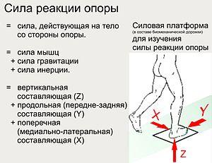 Нагрузка веса тела на опорную поверхность ног свыше 30 г на 1 см