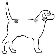 шёрстный покров собаки википедия
