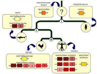 Упрощенная схема эволюции