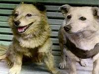 http://upload.wikimedia.org/wikipedia/ru/thumb/9/97/Lisichka_and_Chayka.jpg/200px-Lisichka_and_Chayka.jpg