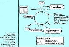 Анаэробные организмы это в биологии