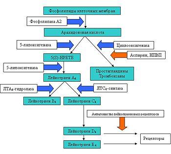 патогенез бронхиальной астмы аспириновой