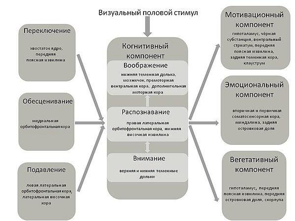 Парафилия сексология  Википедия