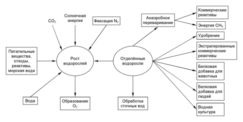 Биотехнологии доклад по биологии 5088