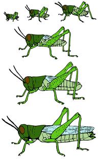 крылатые насекомые фото и названия