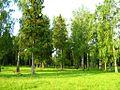 Кольчугино Владимирская область