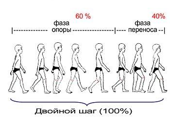 виды походок у женщин