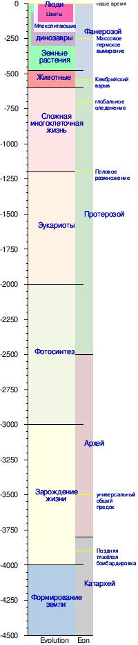 Хронология эволюции