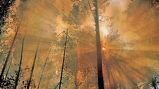 Fire to forest.jpg