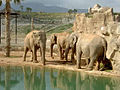 Elephants bath 7.jpg