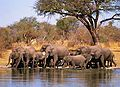 Elephants bath.jpg