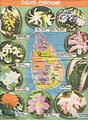 Flowers of the sri lanka provinces.jpg