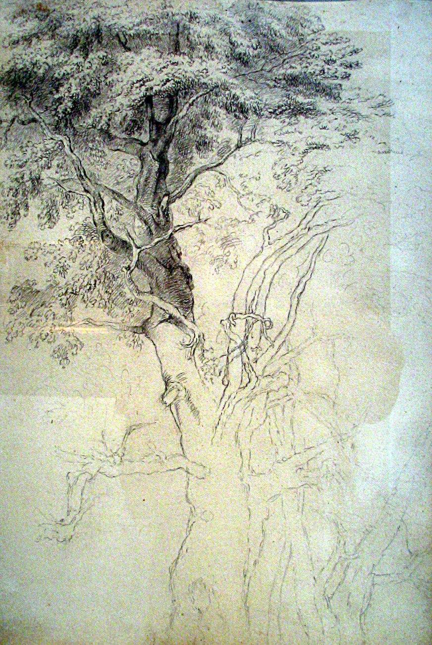 Avramovic studija drveta